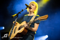 The_Common_Linnets_isf_2016-005