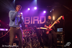 Jacob-Banks-Bird-20180319-Howmanyclicks_010